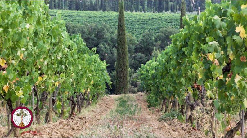 Caprili - Rosso di Montalcino DOC 2018 - Brunello Wine Tasting Episode 14 of 31